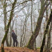 Туман в лесу. :: Виктор Чепишко