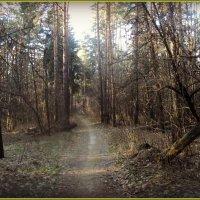 Сегодня мы в лесу гуляли. :: Ольга Кривых