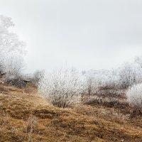 Осенне-зимний этюд... :: Александр Никитинский