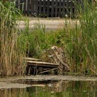 мостик у озера :: Данил Крижановский