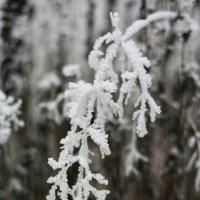 Зимние узоры :: Анастасия Шаронова