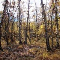 В лесу. :: Михаил Болдырев