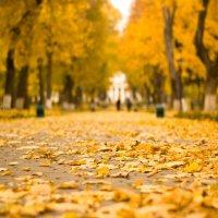Дворцовый парк. Осень. :: Ната Кова