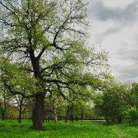 В весеннем парке :: Роман С.