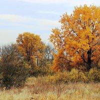 Осень,осень... :: Валентина Домашкина
