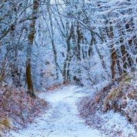 Зимний лес :: Николай Николенко