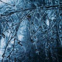 winter :: Сергей Каверин