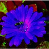 Summer Blues :: muh5257