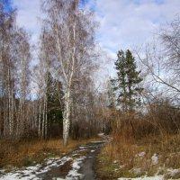 Пейзаж . :: Мила Бовкун