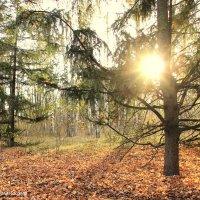 В осеннем лесу. :: Валентина Домашкина