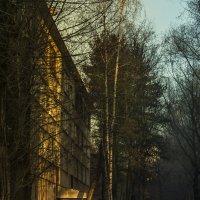 Солнце ноября :: AVA Тина