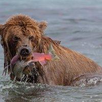 На рыбалке :: Денис Будьков