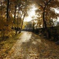 Осень в Первомайском парке :: Татьяна_Ш