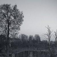 Осенняя графика :: Елена