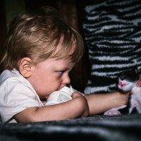 Любимый котёнок... :: Kristi Foto