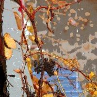 Акварельный сон. Шёпот винограда под дождём. :: Константин Николаенко