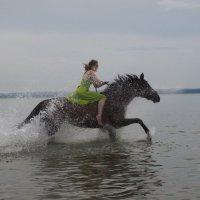 Купание коня :: Марина Лощенко