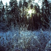 Почти зима :: Ольга Бекетова