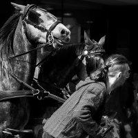 кони в городе :: MVMarina