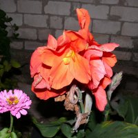 цветы осени :: elenka lenina