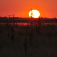 Я вижу, как тонет солнце, расстаяв в своём огне :: Ирина Данилова