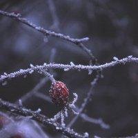 Первый зимний поцелуй :: Мария Панькина