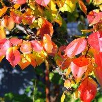 Осень сад наш украшает разноцветною листвой. :: Валентина ツ ღ✿ღ