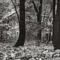 Дом-призрак :: Андрий Майковский