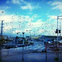 дождик... :: Александра Шевченко