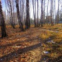Свет и тени в лесу. :: Мила Бовкун