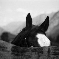 Прокат лошадей :: Alexander Bendyukov