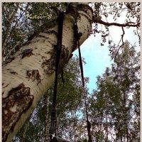 Однажды в лесу... :: Кай-8 (Ярослав) Забелин