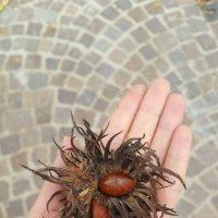 Три орешка для золушки :: Крестинка Zakharova