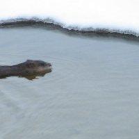 И зимой можно купаться... :: Галина Полина