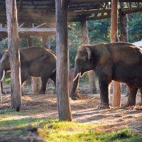 Слоностоянка :: Адель Гайнуллин