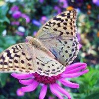 Бабочка. :: Жанна Савкина