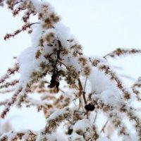 снег :: Erizo Espinoso