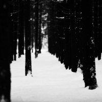 лес :: Nastya Ishimova