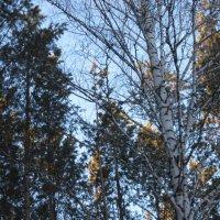 Мороз и солнце, день чудесный :: Валентина Малютина