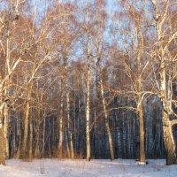 Мороз и солнце, день чудесный... :: Валентина Малютина