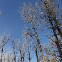 лес :: Виолетта Тибилова