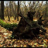 в лесу :: Евгений Егоров