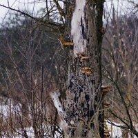 грибы среди зимы :: ольга кривашеева