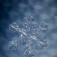 макро-зима :: Соня Орешковая (Евгения Муравская)