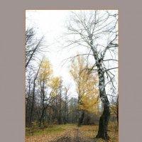 Осенний лес :: Александр Жарахин