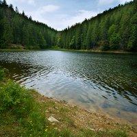 Лесное озеро :: Василий Каштанюк