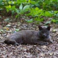 кот,который живет в лесу :: Наталья Маркова
