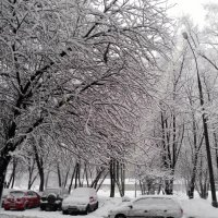 Зима :: Анна Шабунина