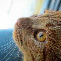Золотые глазки :: Alex Larionov