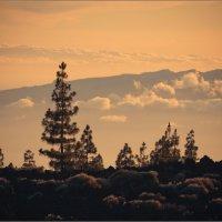 Закат в национальном парке... :: Александр Константинов